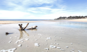 Image of a part of a tree in the water at Carmel River State Beach